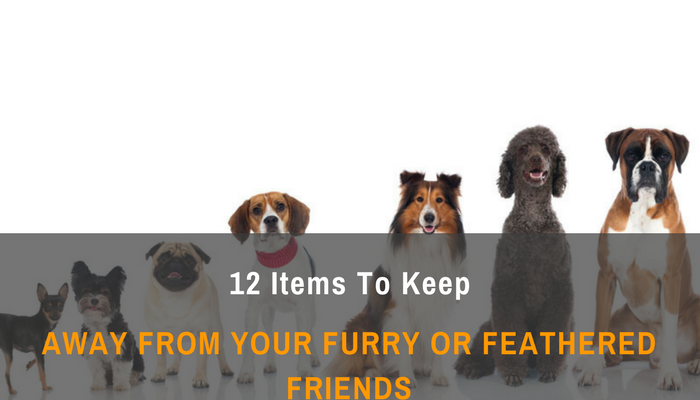 12 Items To Keep Away From Your Furry Or Feathered Friends
