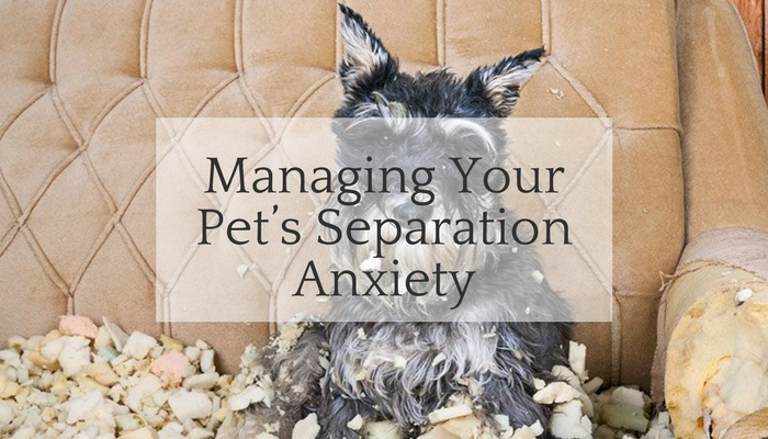 Home Alone- Managing Your Pet's Separation Anxiety