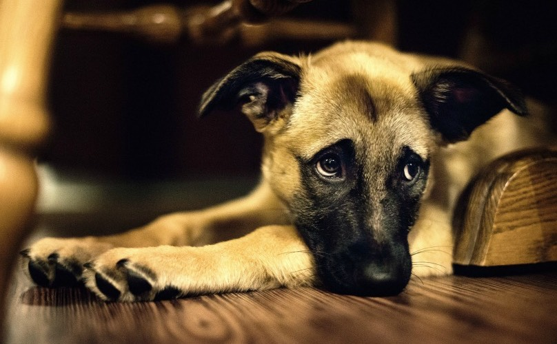 Home Alone: Managing Your Pet's Separation Anxiety