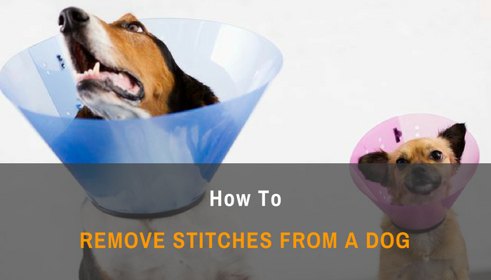 How To Remove Stitches From a Dog