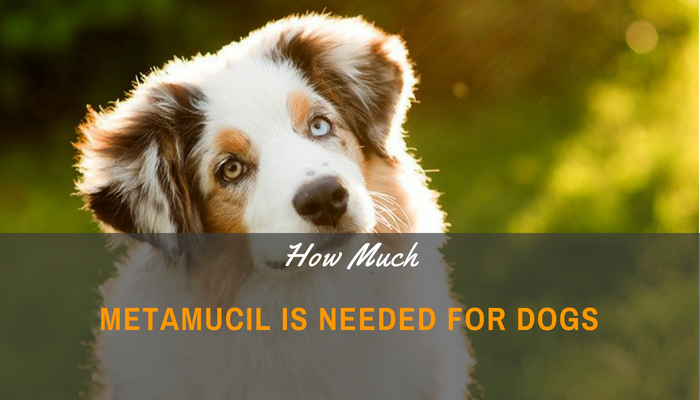 How Much Metamucil Is Needed For Dogs_