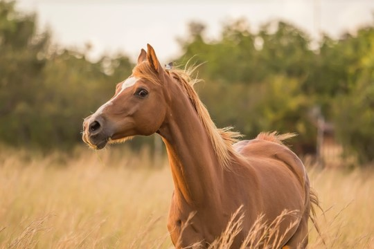 How to Tell My Horse is Healthy