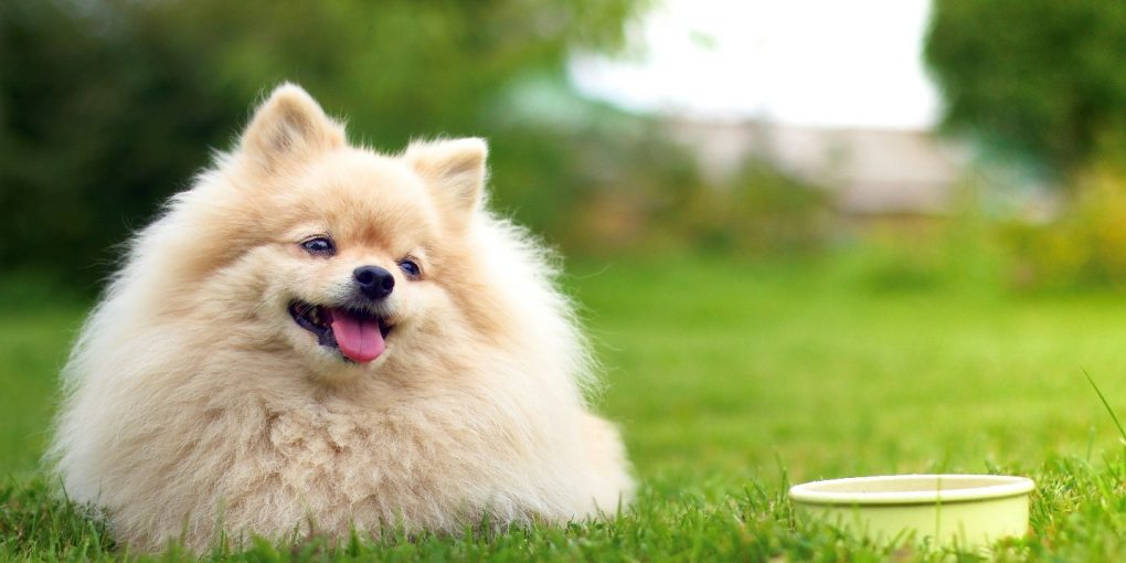 Dog Food for Kidney Diseases: Facts You Need to Know