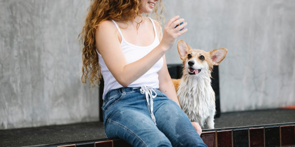 5 Tips for Coming Up with Pet-friendly Interior Design